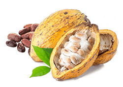 cacao-fruit.png